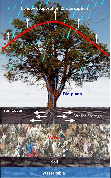 Phytocapping Of Landfills